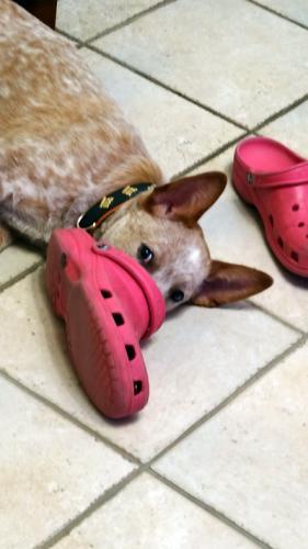 emma-crocs